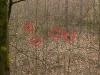 Schwer zu erkennende Rotte Wildschweine