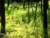 Farn-Wald