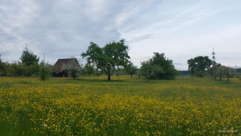 004 Gäurandweg - Am Wegesrand
