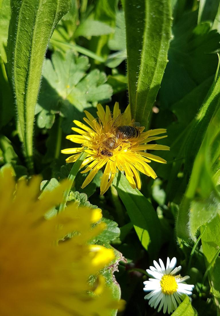 Multi-Geocache Bienen