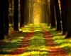 Wald halt