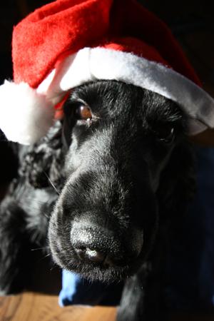 bossleyweihnachten