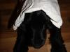 stofftascheaufhund