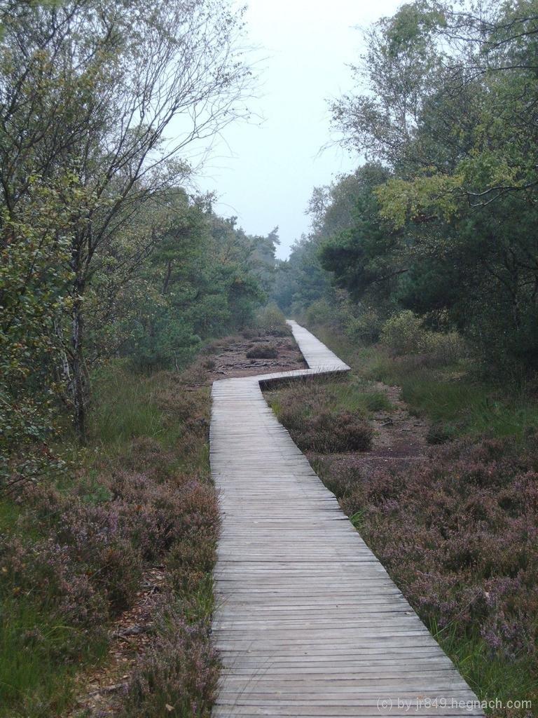 Weg durch das Moor